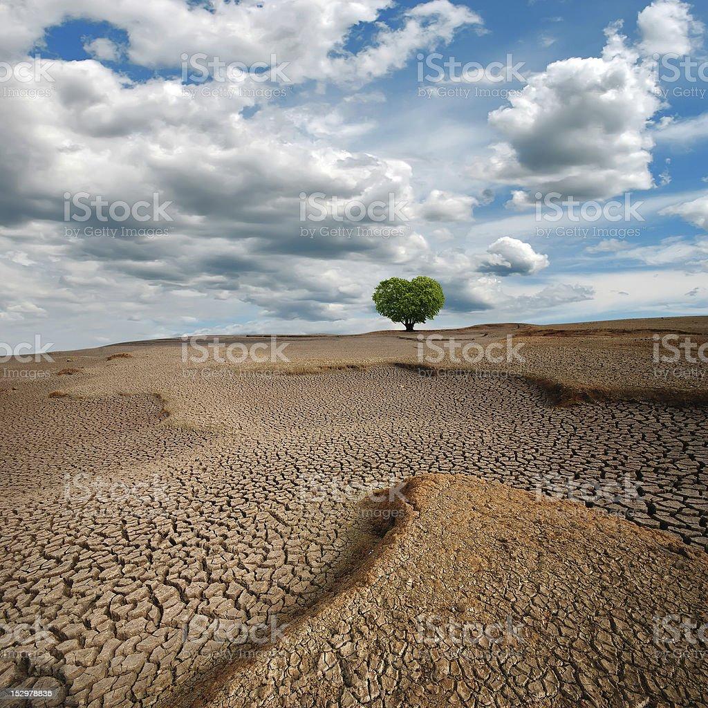 Dry lake bed,Heart-shaped tree royalty-free stock photo