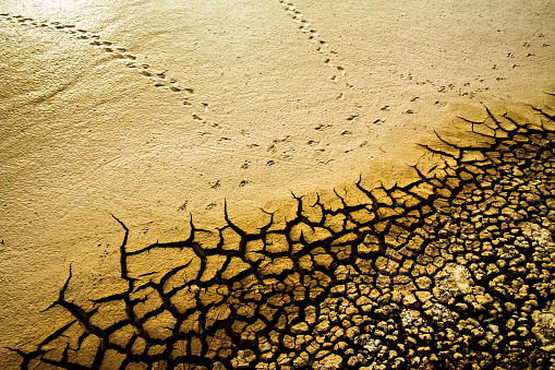 Dry Land And Birds Footprint Brown Yellow Dry Soil Cracked Ground Texture Background Dry Cracked Earth Texture Photo Stock Photo - Download Image Now