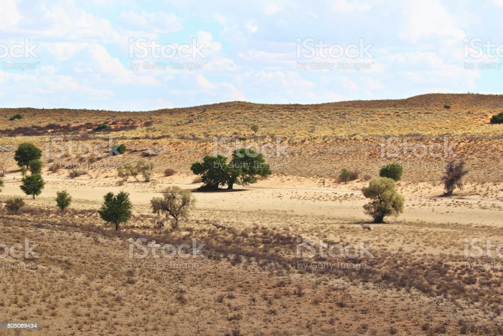 Dry landscape in the Kgalagadi stock photo