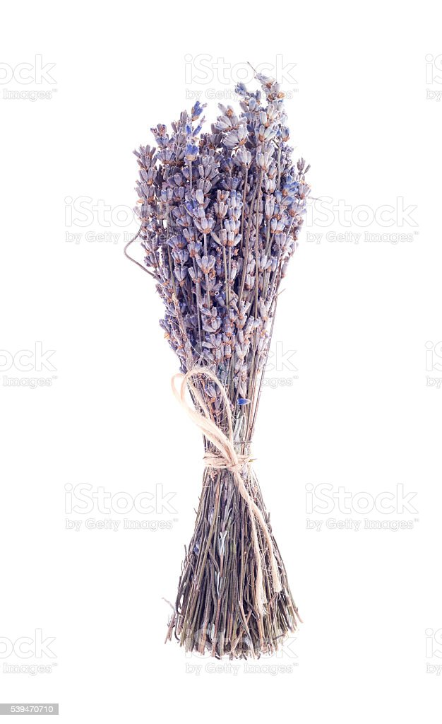 dry lavender bunch isolated on white background stock photo