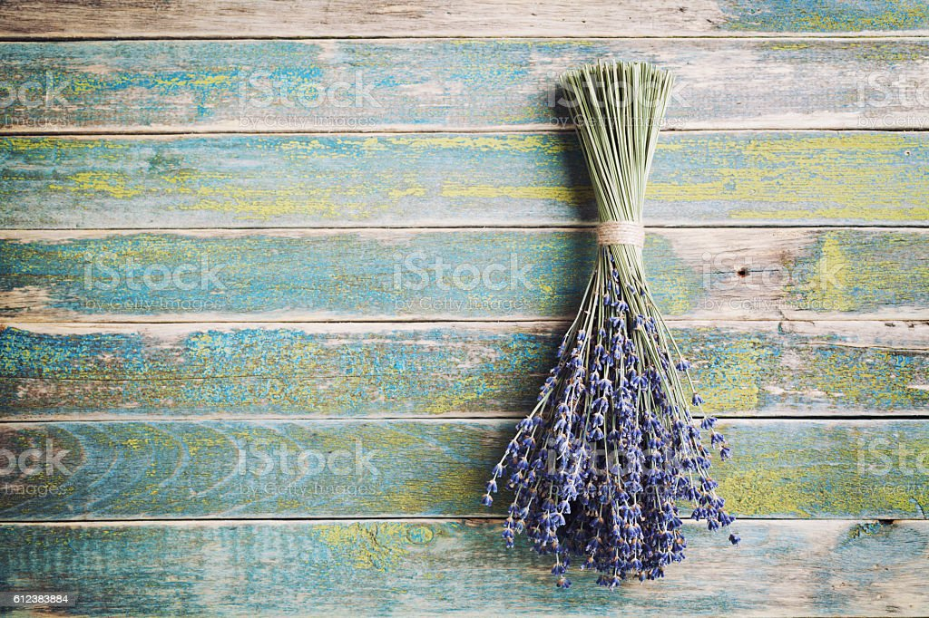 Dry lavender hanging on vintage wall. Copy space for text. stock photo