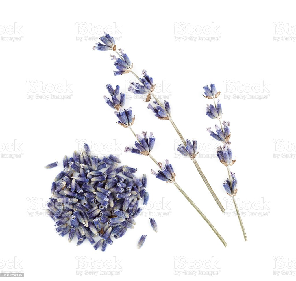 Dry lavender isolated on white background. stock photo