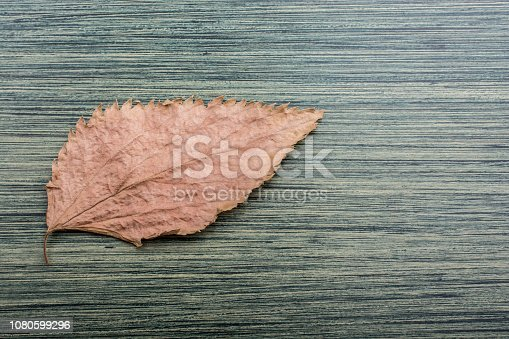 istock Dry leaf as an Autumn background 1080599296