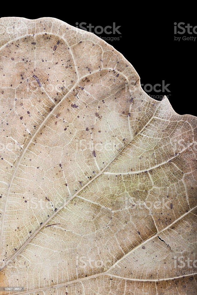 dry leaf close up stock photo