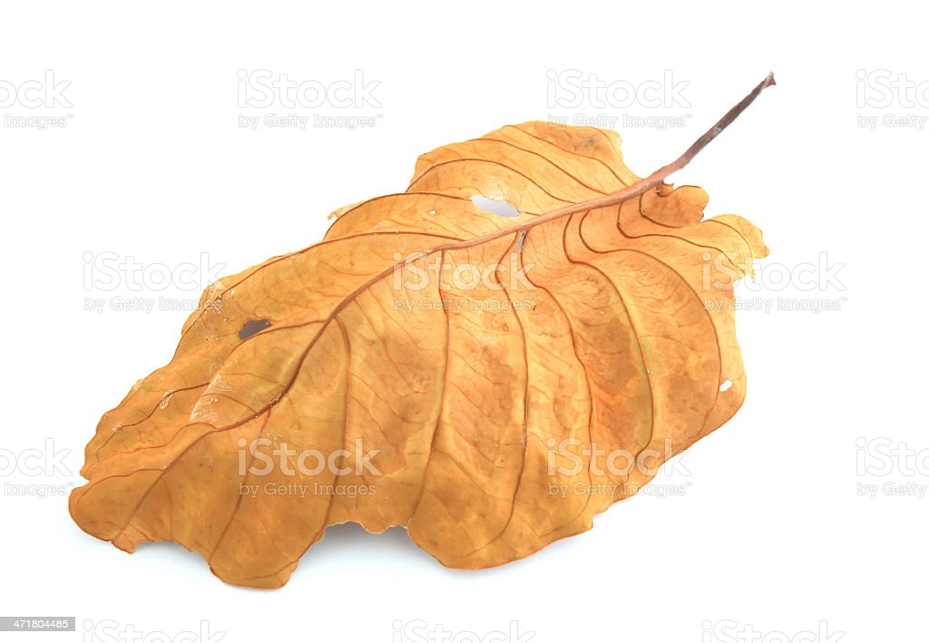 dry leaf lip isolated royalty-free stock photo