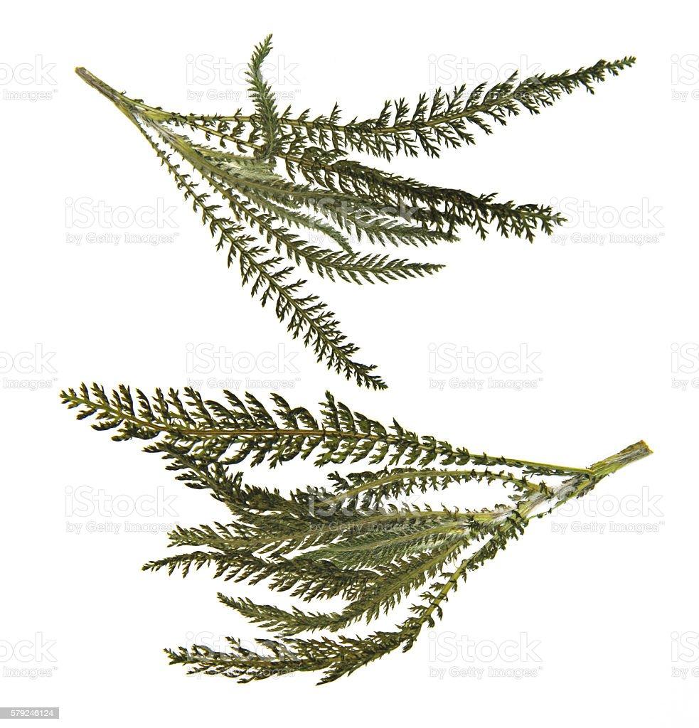 dry leaf of fern stock photo