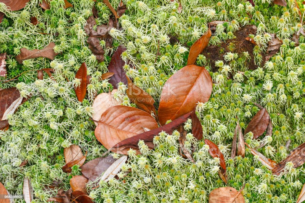 Dry leaf on moss background stock photo