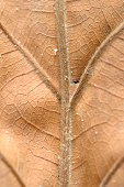 istock dry leaf on textured paper (vertical) 184602297