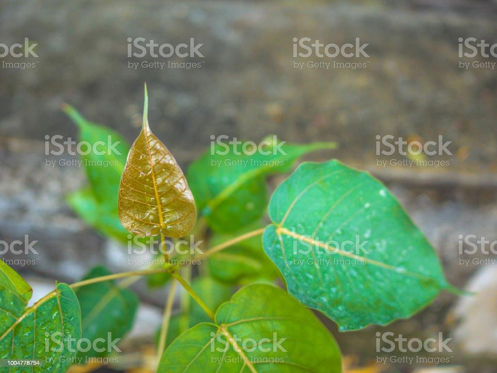 Folha seca em cima de uma árvore pequena - foto de acervo