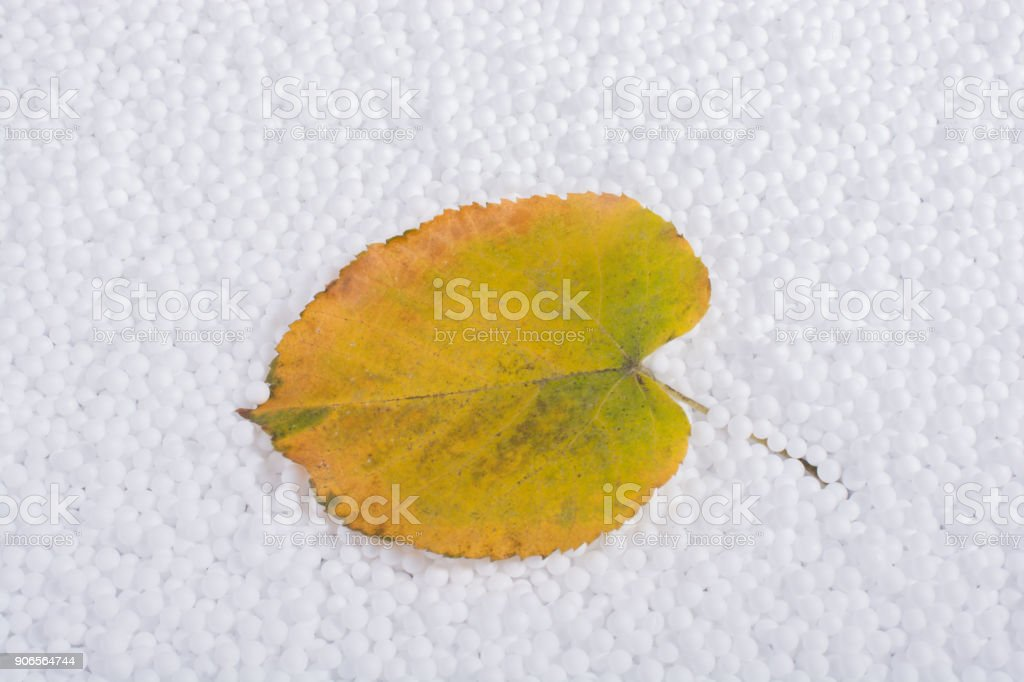 Dry leaf on white polystyrene foam balls stock photo