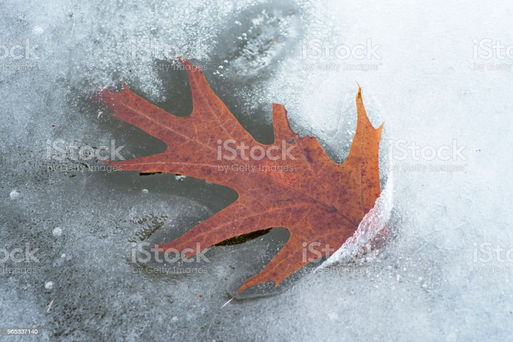Dry Leaf royalty-free stock photo