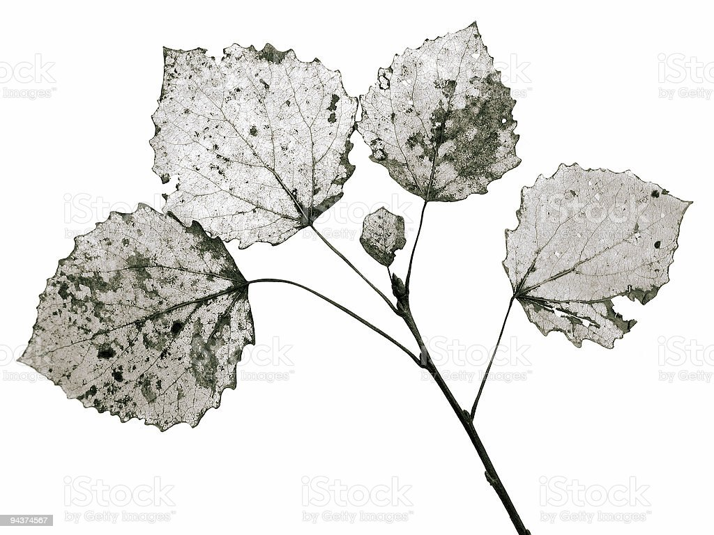 Dry leaf structure royalty-free stock photo