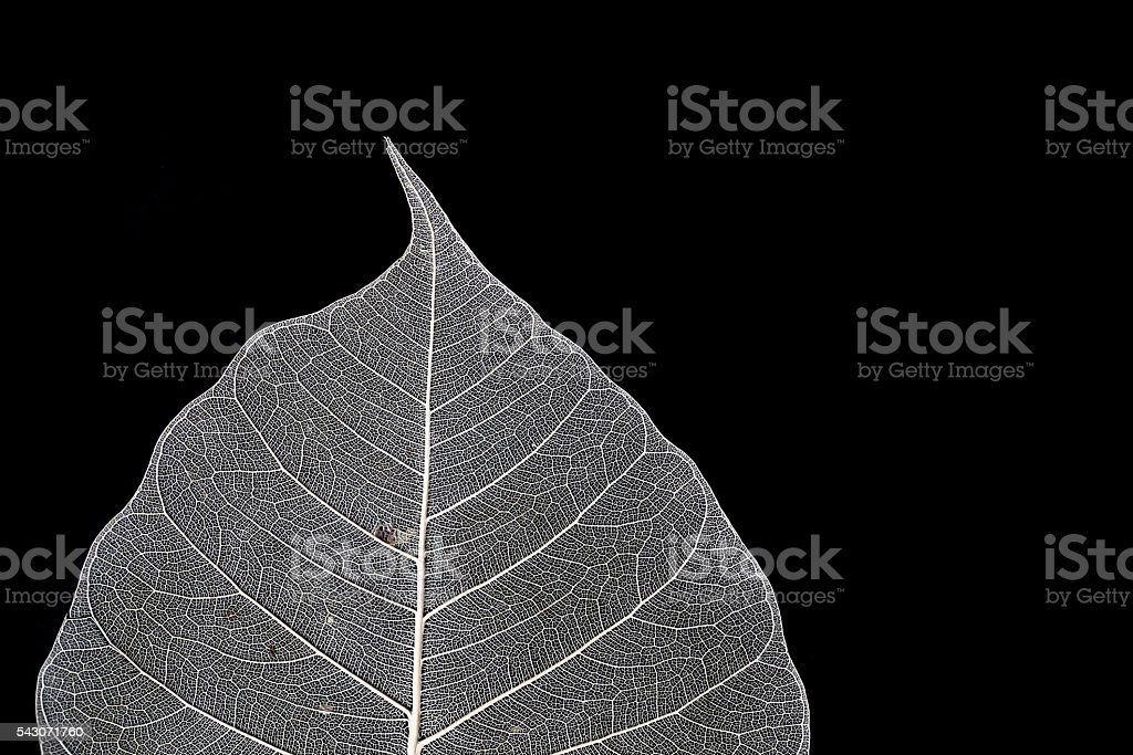 Dry leaf texture on black background stock photo