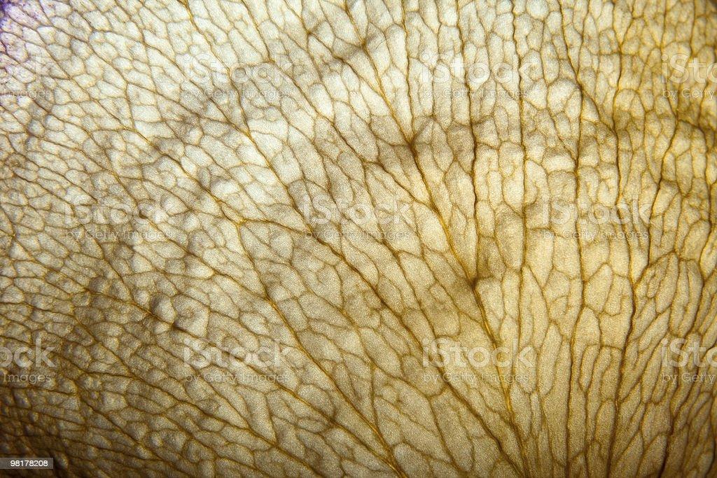기체상태의 잎 베슬 구조 royalty-free 스톡 사진