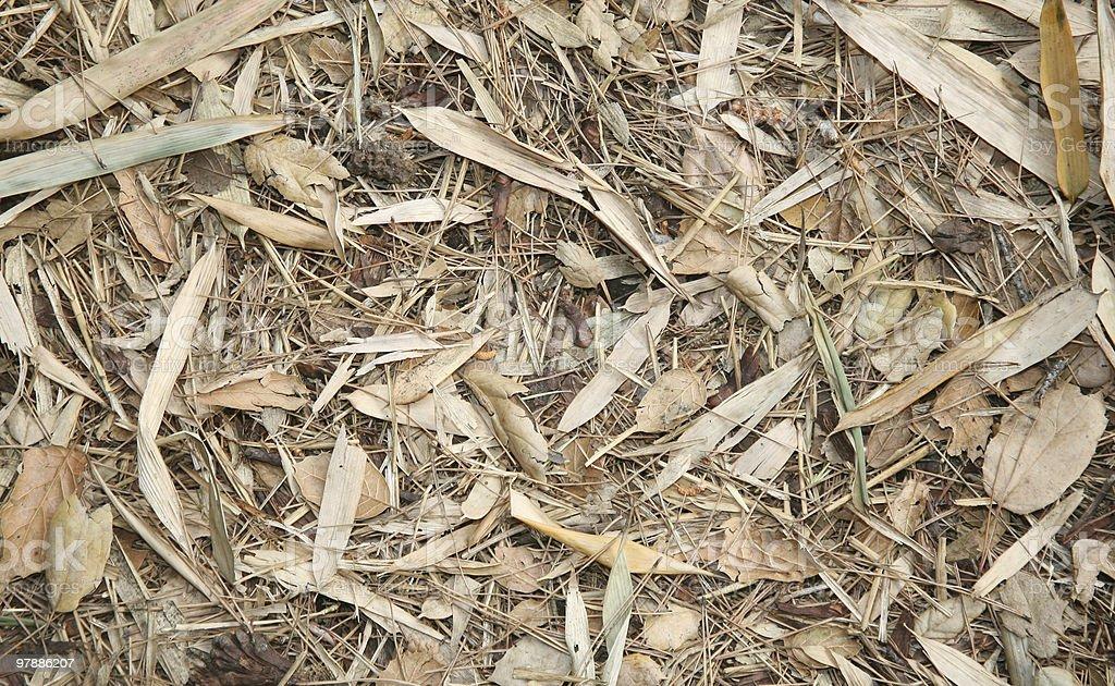 Dry leafy debris background stock photo