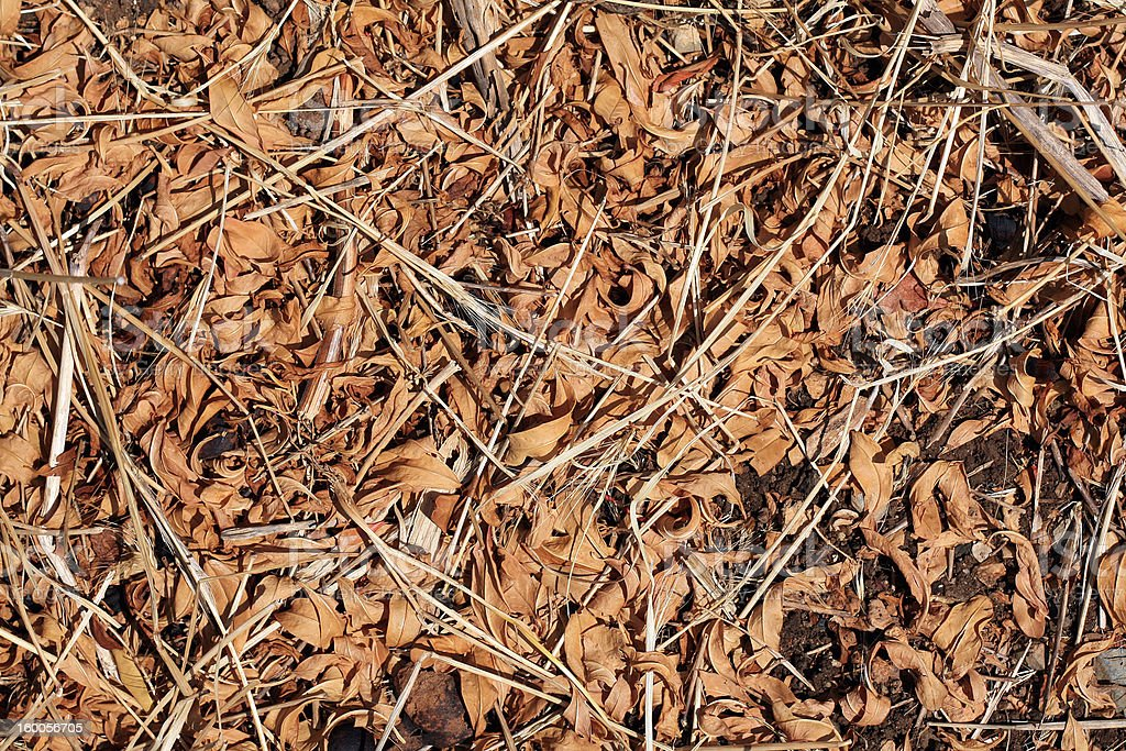 dry leaves and grasses stock photo