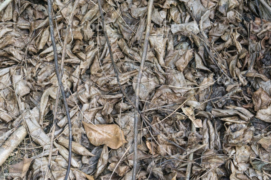 Dry Leaves Background Dead Leaf Stock Photo - Download Image