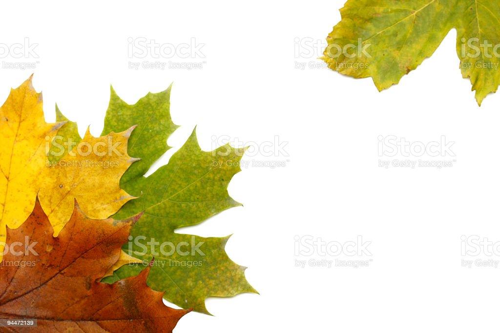 Suchych liści w tle zbiór zdjęć royalty-free