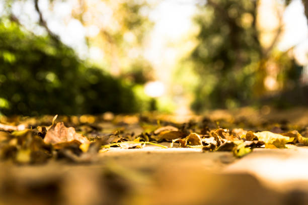 Dry leaves in a park in Indian Summer stock photo