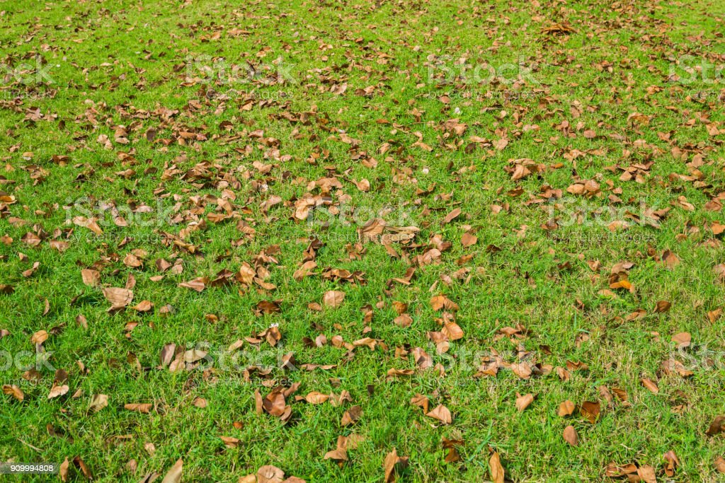 Dry leaves of tree on the grass field stock photo