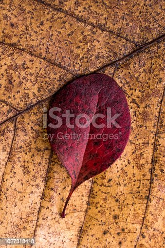 istock Dry leaves on as an autumn background 1027318418