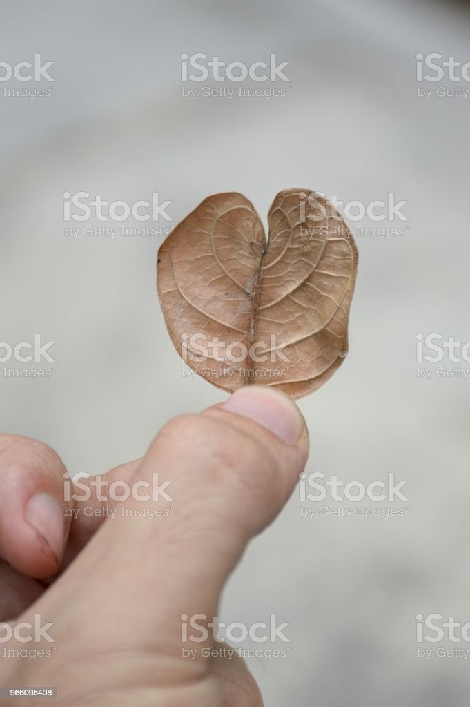 torra löv man å - Royaltyfri Finger Bildbanksbilder