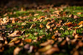istock Dry leaves on the freshness green moss and fern background. 903700430