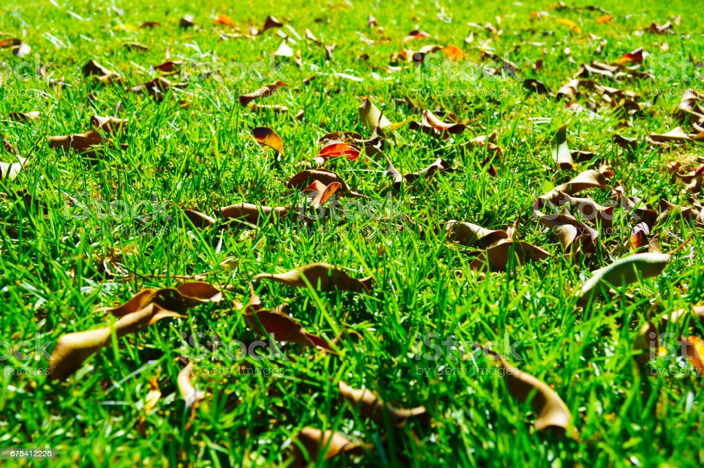 Dry leaves on the grass photo libre de droits