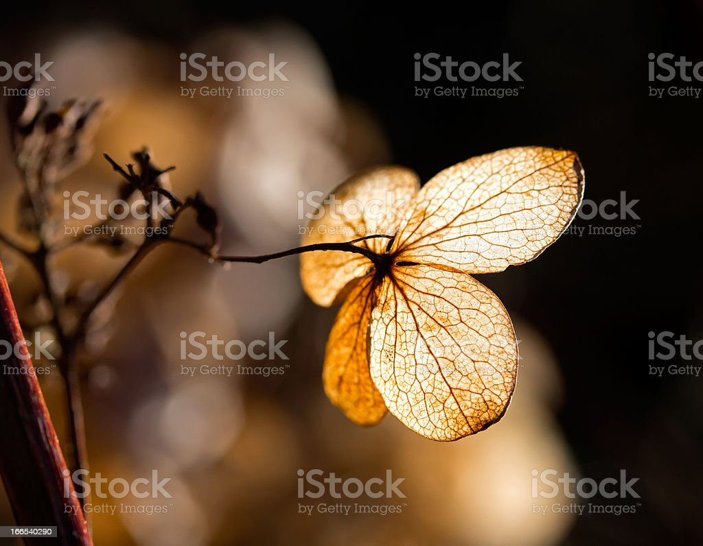 Dry leaves-petals in the sunlight royalty-free stock photo
