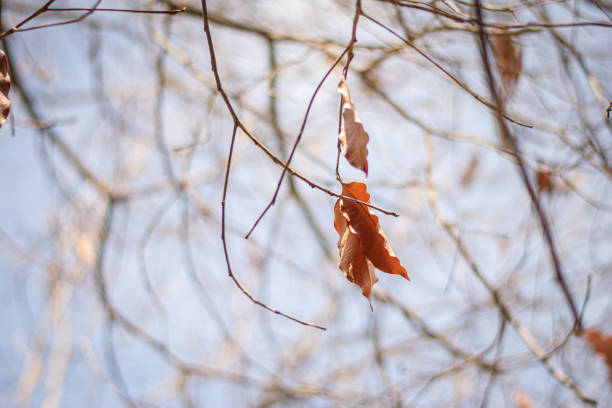 dry life on tree witch blur background stock photo