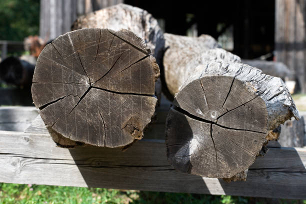Dry logs in an old sawmill stock photo
