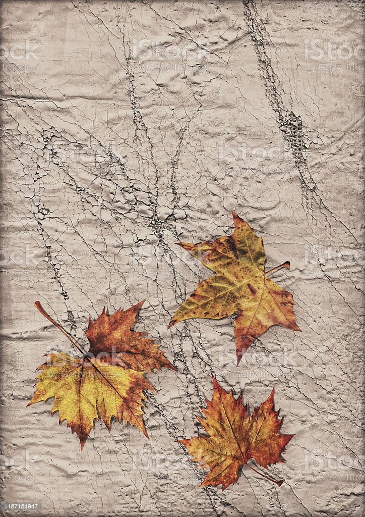 Dry Maple Leaves Isolated on Primed Cracked Exfoliated Burlap Canvas royalty-free stock photo