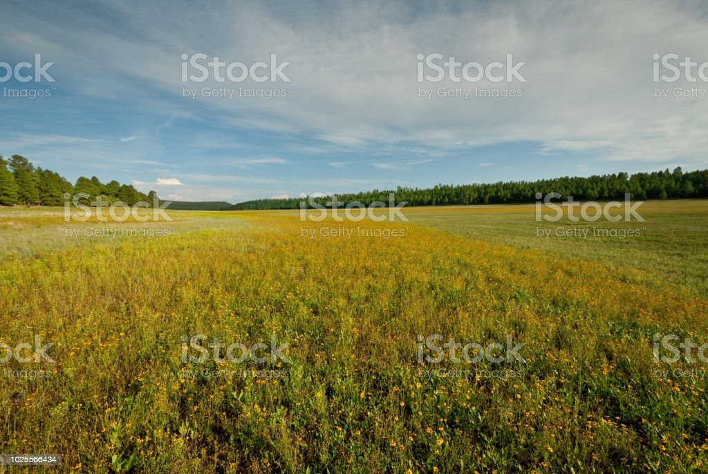 Dry Meadow at Lower Lake Mary stock photo