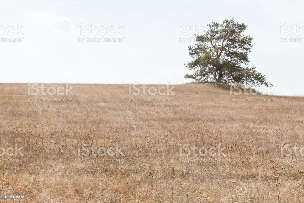 Dry Meadow in the Czech Republic. Hot summer day on the pasture. Lack...