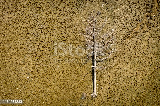 istock Dry mud and a dead tree, flat stacked background and texture - stock image 1164584383