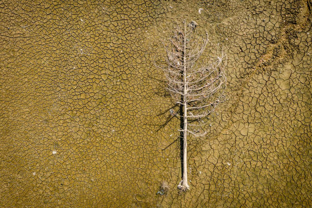 Dry mud and a dead tree, flat stacked background and texture - stock image Cracked dry mud earth with a dead conifer tree, textured dry lake bottom surface and other abstract images to create great backgrounds and textures with copy space. Shot on DJI Mavic 2 Pro with maximum quality, directly above. lake bed stock pictures, royalty-free photos & images