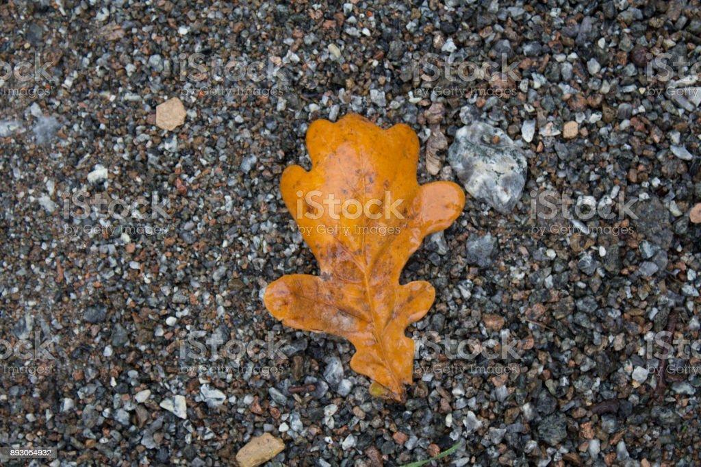 dry oak leaf on asphalt stock photo