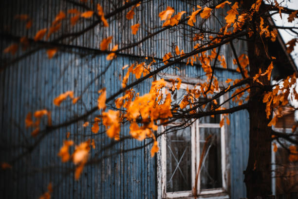 Dry orange oak leaves in front of house Beautiful dry orange oak leaves and branches of tree in front of boardwalk facade of dark-blue old summer house with single window during moody grey autumn day russian dacha stock pictures, royalty-free photos & images