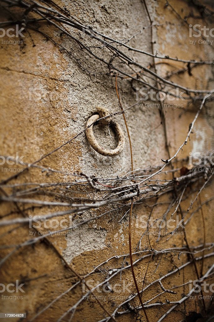 dry out plant on a old wall stock photo