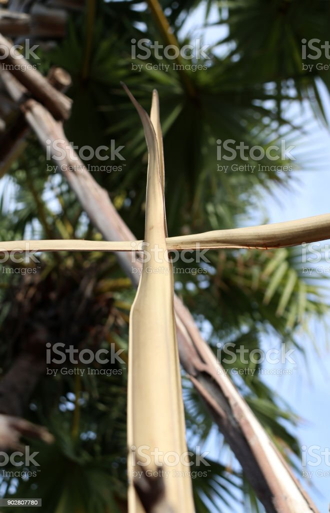 Dry palm leaf set cross to crucifix on palm leaves with sky background. stock photo