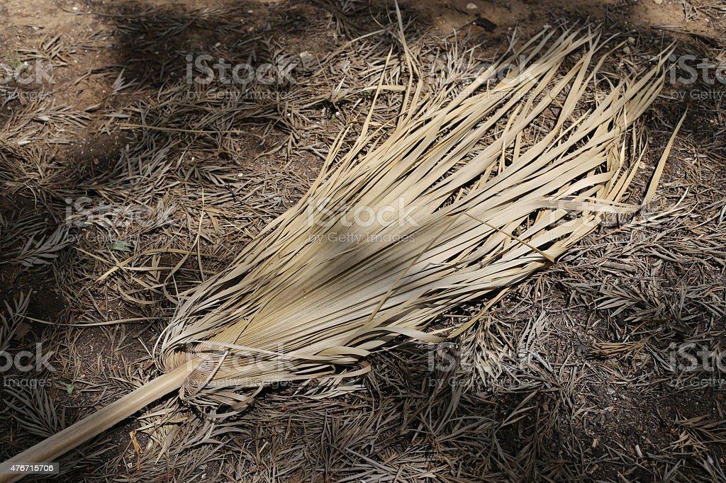 Dry palm tree branch. stock photo