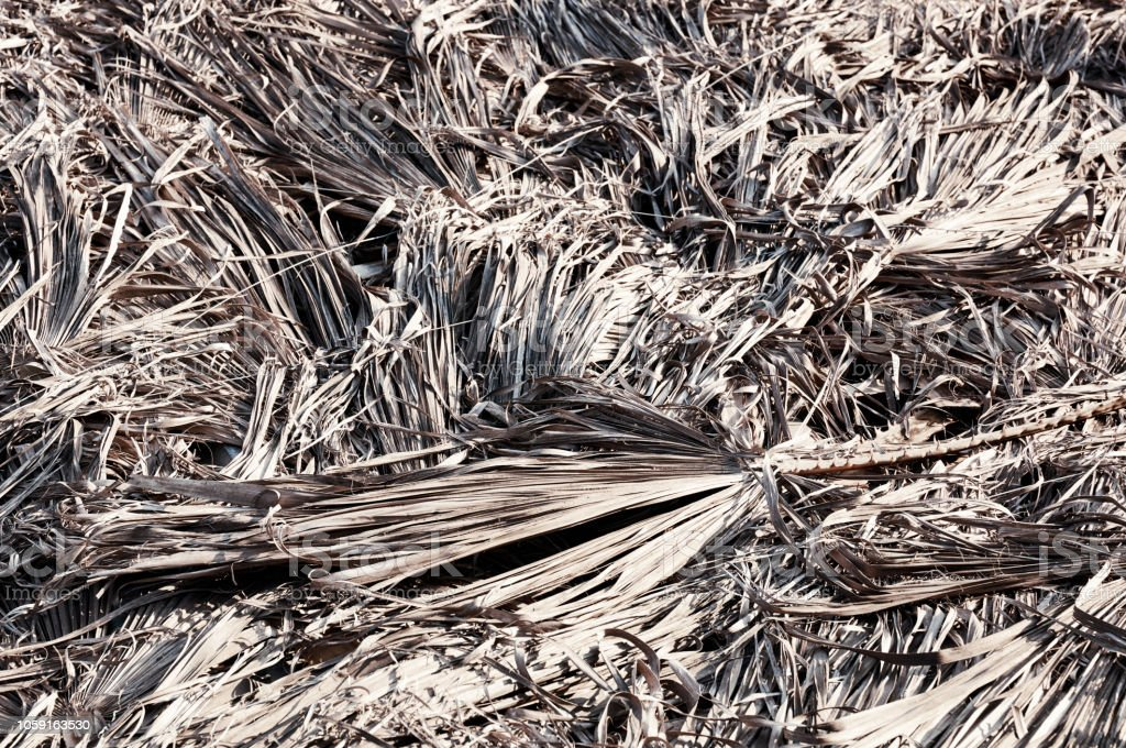 Dry palm tree leaves stock photo