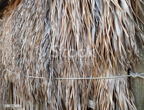 Dry palm tree wall in tropical construction. Dry old palm leaves, background texture.