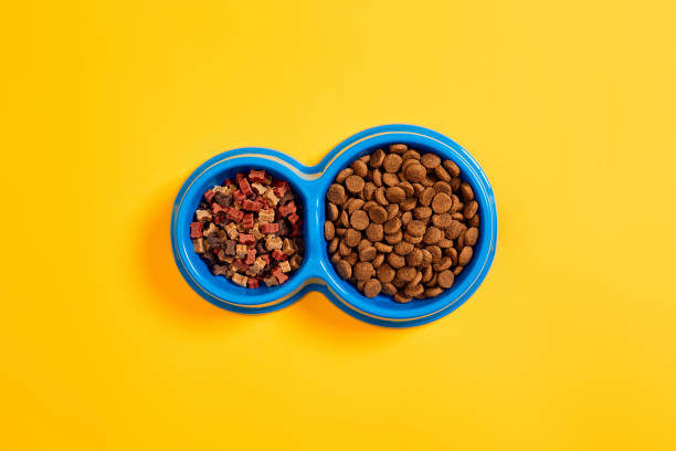dry pet food in bowl on yellow background top view - lata comida gato imagens e fotografias de stock