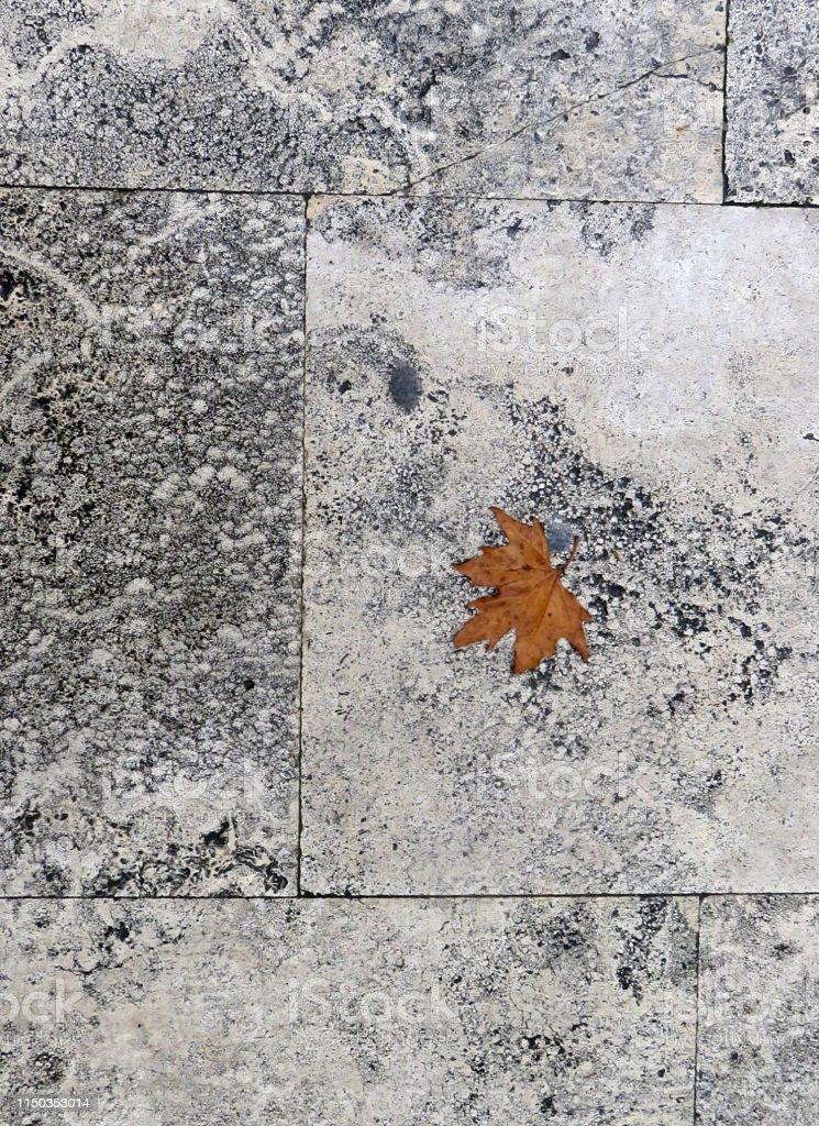 Dry plane tree leaf on wet square stone slabs