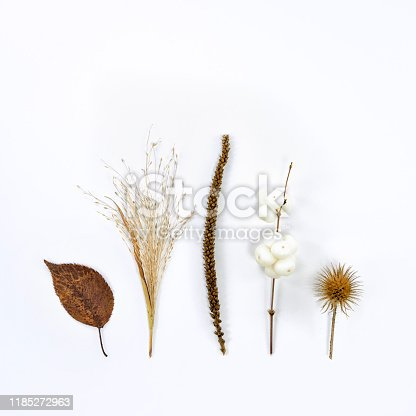 dry brown plants in autumn at a white background