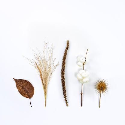 istock dry plants in autumn 1185272963