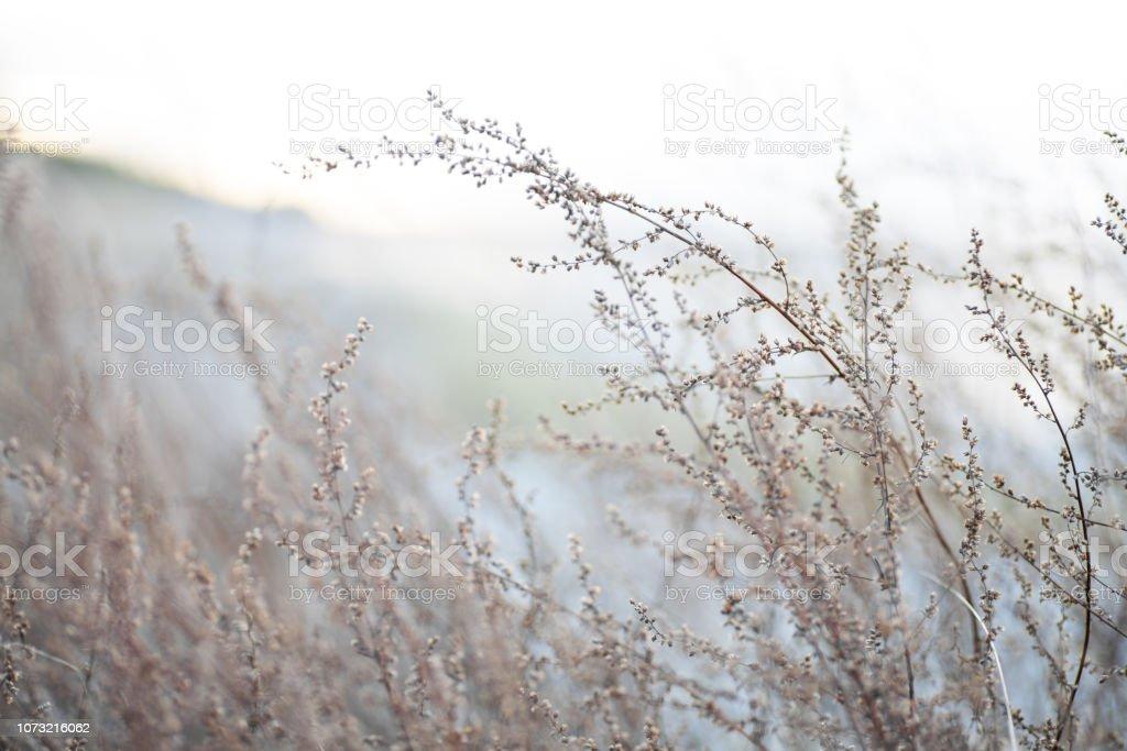 Trockene Pflanzen an einem windigen winterlichen Strand – Foto