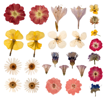 Dry pressed wild flowers