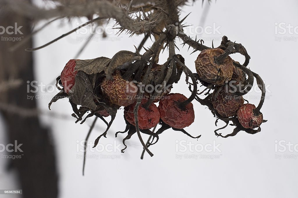 Dry red berry royalty-free stock photo